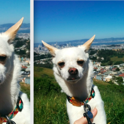 photo of dog and photo of cropped dog