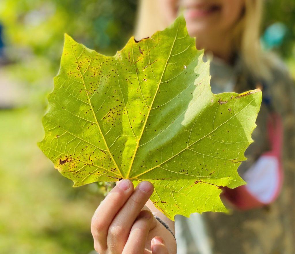 student holding leaf